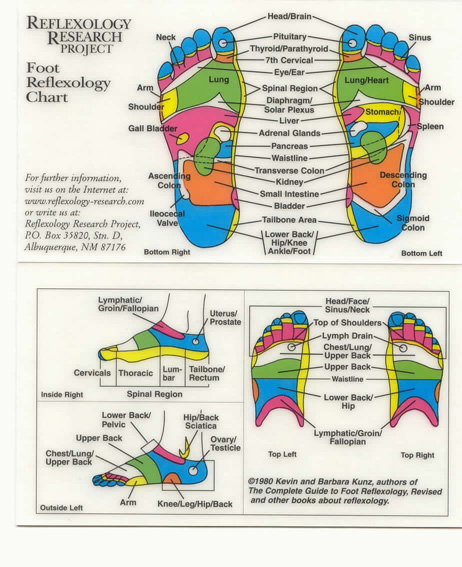 Reflexology - Foot Chart